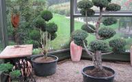 Winterharte Formschnittpflanzen im Glas-Pavillon